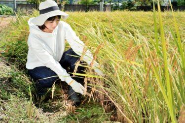 農業をはじめるにはまず何をすればいいか